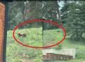 Ayılar Esentepe'yi bastı (Video Haber)
